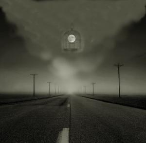a lua indica meu caminho com gaiola