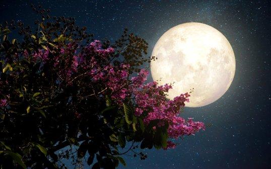 moon-FLOWER0517